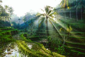 Bali flora en fauna